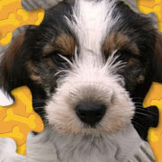 Обложка Adorable Puppy Jigsaw Puzzle
