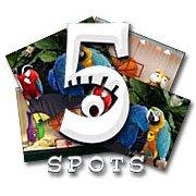 Обложка 5 Spots