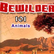 Обложка Bewilder-II