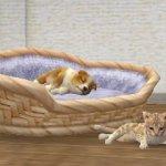 Скриншот Nintendogs + Cats – Изображение 5