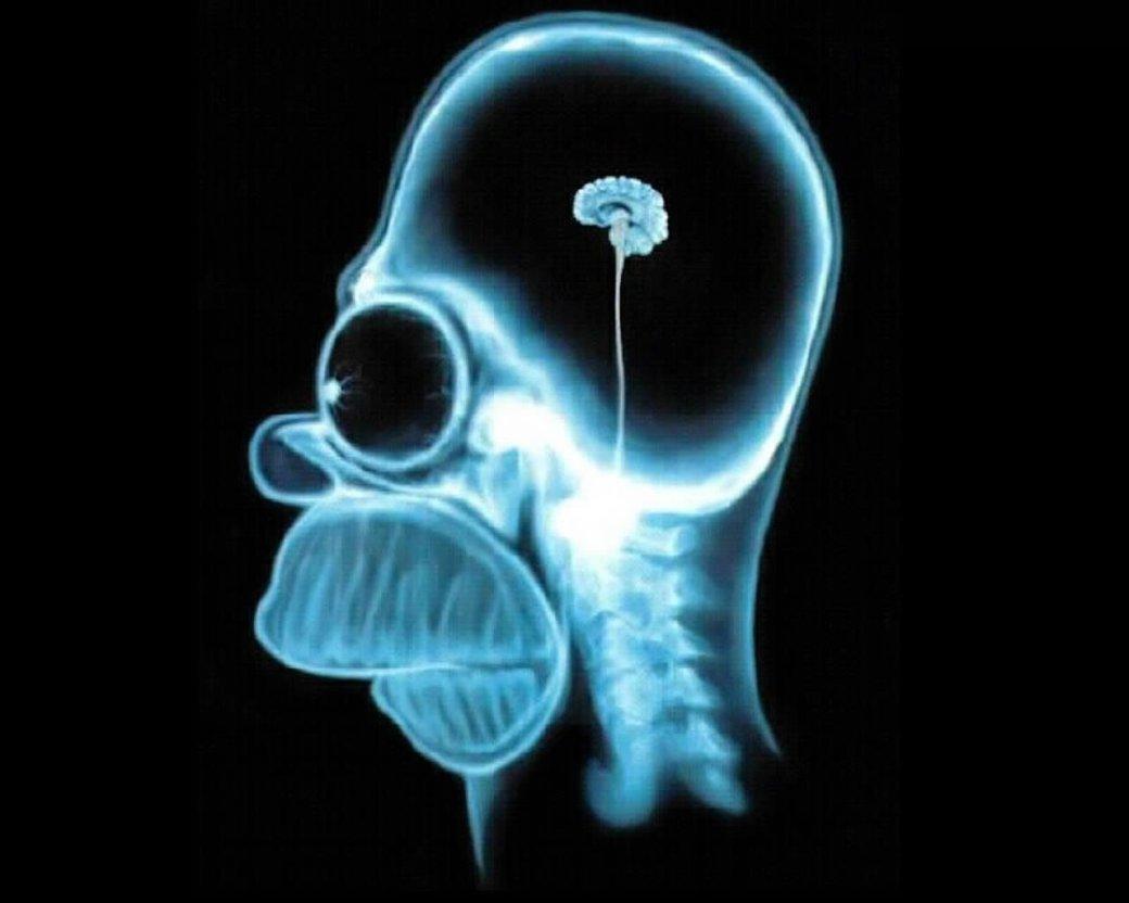Вот такая «Люси»: 7 мифов о мозге - Изображение 10