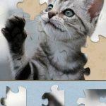 Скриншот Adorable Kitten Jigsaw Puzzle – Изображение 4