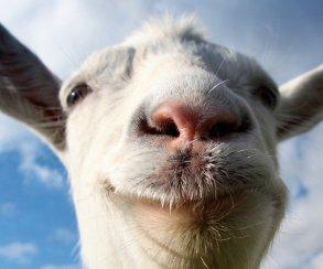 Симулятор козла превратят в сетевую ролевую игру