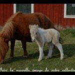 Скриншот ponies bowling – Изображение 3