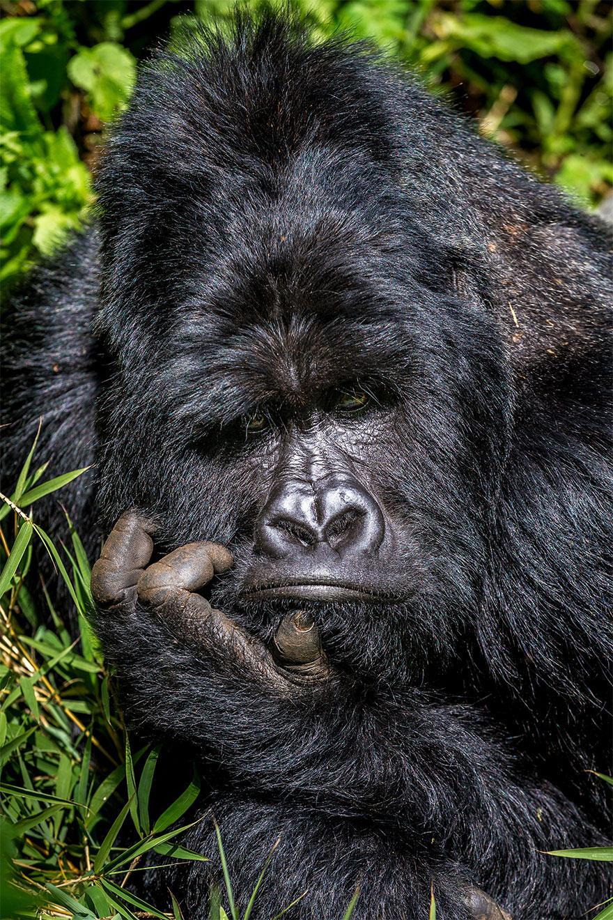 Позитивная галерея: 40 фото сконкурса насамый смешной снимок дикой природы   Канобу - Изображение 3972