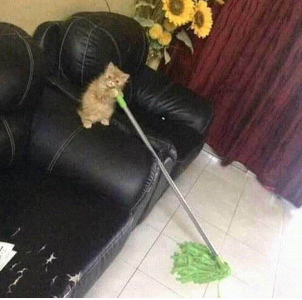 Ненависть, грусть, безысходность и коты. Вспоминаем самые забавные фотографии ко дню кошек!. - Изображение 31