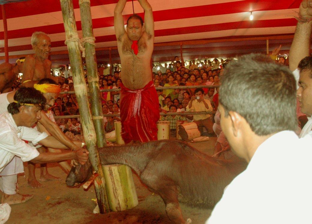 Животная жестокость | Канобу - Изображение 1