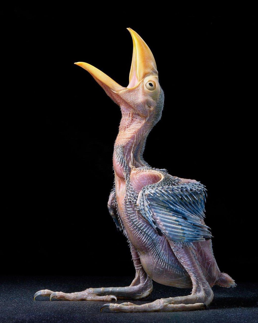 Фотограф сделал «модельные» портреты исчезающих и редких птиц   Канобу - Изображение 12923
