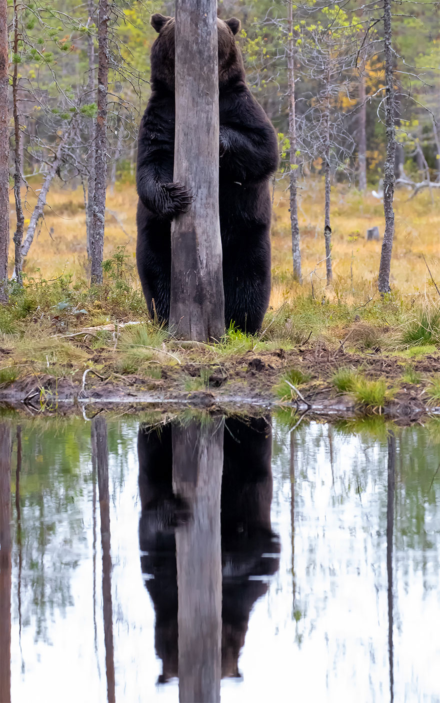 Позитивная галерея: 40 фото сконкурса насамый смешной снимок дикой природы   Канобу - Изображение 3967